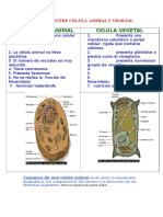CELULA VEGETAL.doc