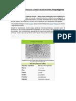 Bacillus Thuringiensis en Relación a Los Insectos Fitopatógenos