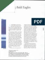 Bald Eagle Ageing Birding