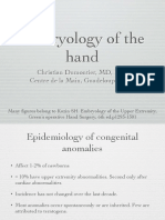 Embryology Hand