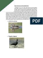 Tipos de Aves en El Humedal de Ite