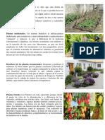 Beneficios de Las Plantas