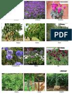 Tipos de Plantas Ornamentales. Frutales. Florales y Frutos Secos