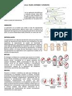 Células, Tejido, Sistema y Aparatos