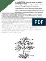 La Planta.docx2018