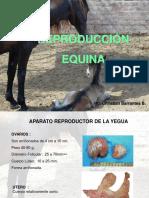 Reproduccion de Equinos