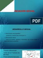 Diferenciación Sexual