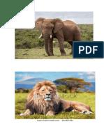 Animales Domesticos (1)