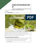 Conozca Todos Los Beneficios Del Té de Ortiga