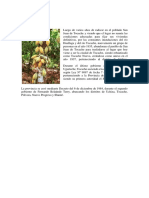 Historia Provincia de Tocache