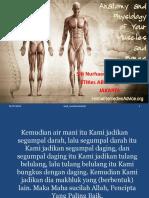 Anatomi Fisiologi Muskuloskeletal Ppt.ppt, Ok Banget