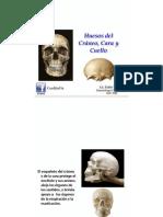 Huesos de la Cara y del Cráneo.