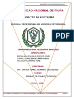 Diagnóstico Por Necropsia en Cuyes