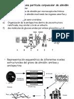 Propiedades y Aplicaciones de las enzimas alpha amylase-hidrolisis almidon.ppt