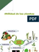 utilidaddelasplantas-110904202612-phpapp02