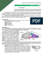 16 - Toxoplasmose