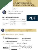 6 Paratiroides CA p