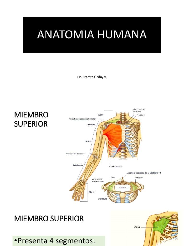 Anatomia Humana Clase 2 Extremidad Superior
