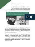 Cómo afecta la cocaína al sistema nervioso.docx