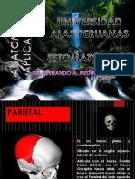 2.- Hueso Parietal