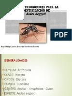 Claves Taxonomicas Para La Identificacion de a. Aegypti-1