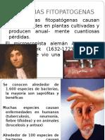 Bacterias Fitopatogenas