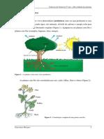 5º Diversidade Das Plantas 2