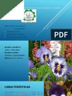 Instituto Superior Tecnológico Publico –Haquira