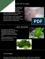Diapositiva Microbiologia Algas