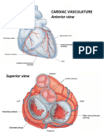 VA Heart Vasculature