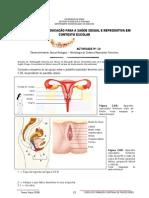 Actividade 10 -Desenvolvimento Sexual Biológico – Morfologia do Sistema Reprodutor Feminino