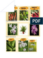 3 Plantas Alimenticias, Ornamentales