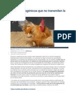 Pollos Transgénicos Que No Transmiten La Gripe Aviar