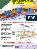Transporte Atraves de La Menbrana Plasmatica