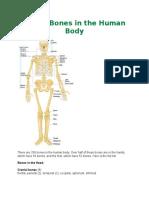 Zahir Skeletal System