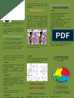 Triptico RelajacionInCrescendo.pdf