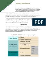 Sistema Auditivo.docx