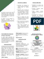 Triptico Plantas Medicinales en La I.E. Callao