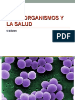 Microorganismos Quinto