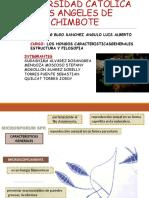 Diapositivas Expo Micro