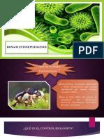 Exposicion de Biotecnologia Biocontroladores
