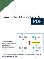 Amino Acid Degradation & Urea Cycle