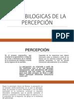 BASES BILOGICAS DE LA PERCEPCIÓN.pptx