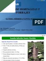 Sandia Santa Matilde - Hortus