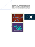 Clostridium tetani.docx