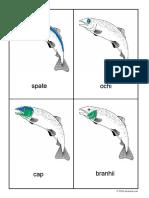 Peștele