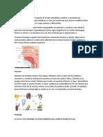 Sistema fonológico.docx