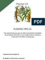 Plantas C4.pptx