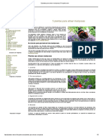5 Plantas Para Atraer Mariposas _ Florpedia