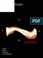 inserciones musculares
